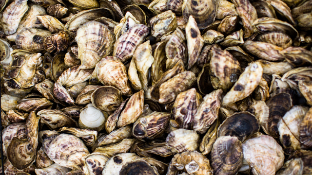 G&F Travel: Wellfleet Oysters