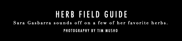 G&F_Herb Field Guide_Opener